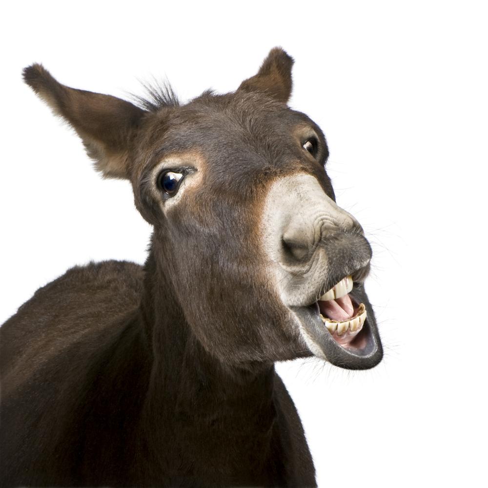 Donkey Laughing