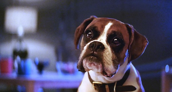 Buster the Boxer is John Lewis' most emotionally engaging festive ad / Emotion measurement firm Realeyes