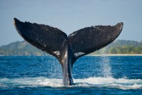 Laughter Spot : The one about a male whale and a female whale