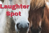 """Laughter Spot : The horse says """" I won the Oaks, St. Leger and the Derby"""""""